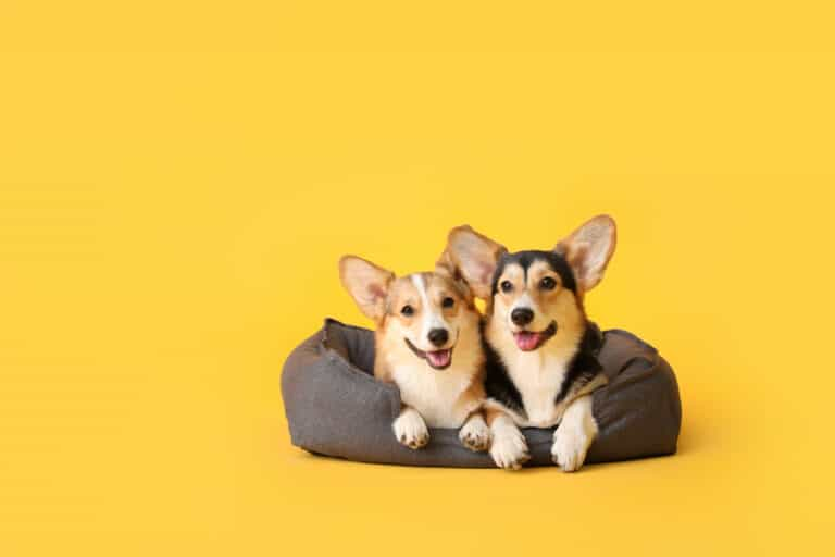 Best Pet Beds of the Year
